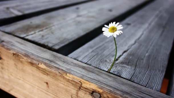 wallpaper flower HD 01