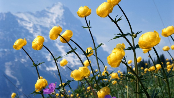 wallpaper flower HD 03
