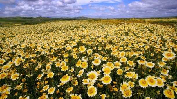 wallpaper flower HD 05