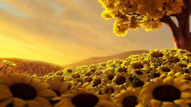 wallpaper flower HD 06
