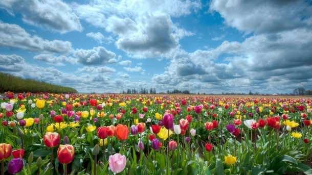 wallpaper flower HD 07