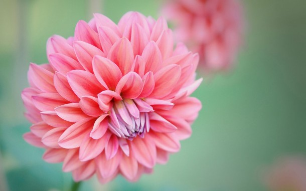 wallpaper flower HD (1)