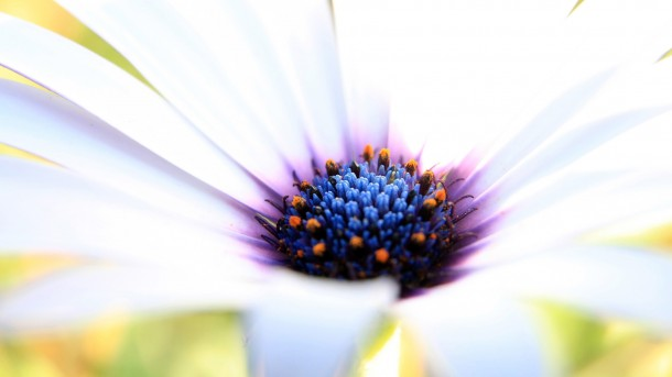 wallpaper flower HD 11