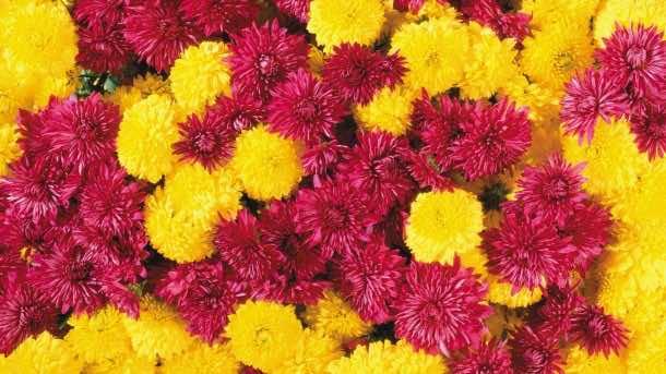 wallpaper flower HD 12