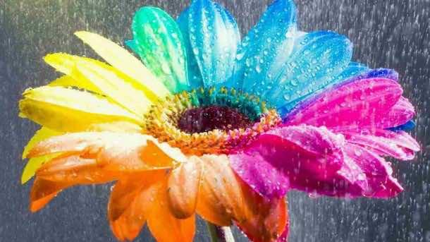 wallpaper flower HD 13