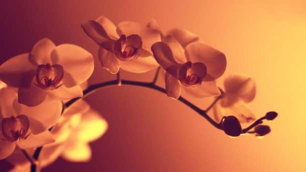 wallpaper flower HD 14