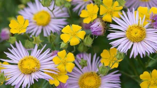 wallpaper flower HD 16