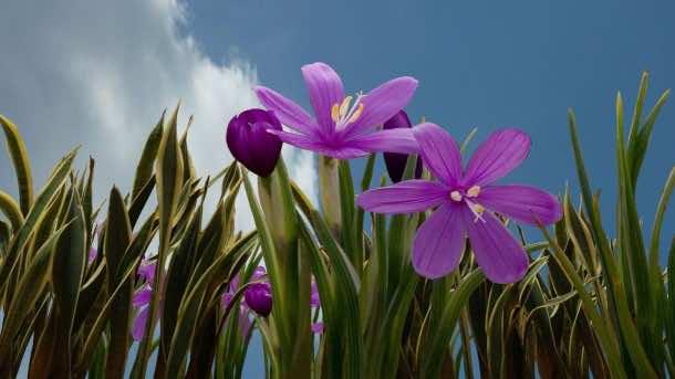 wallpaper flower HD 17