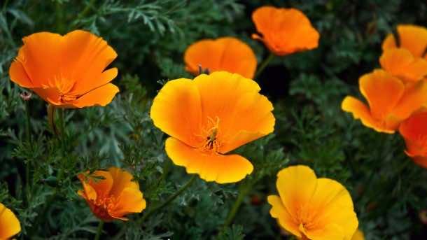 wallpaper flower HD 18