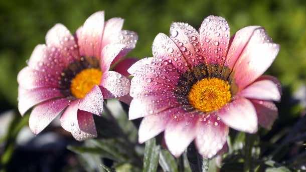 wallpaper flower HD 19