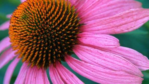 wallpaper flower HD 20