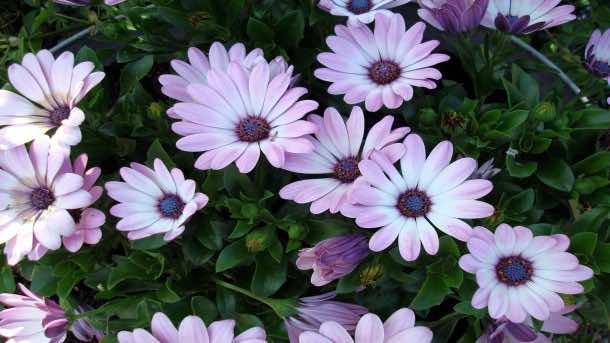 wallpaper flower HD 21
