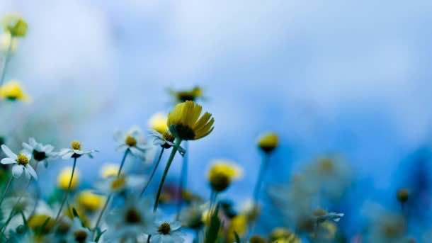 wallpaper flower HD 22