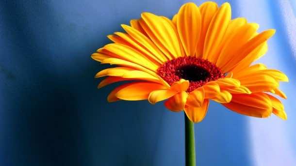 wallpaper flower HD 24