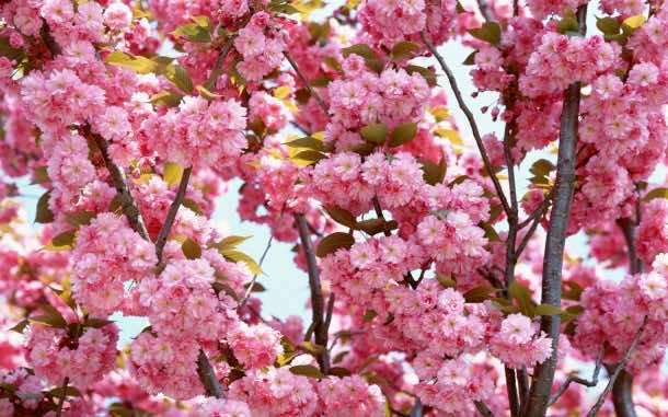 wallpaper flower HD (3)