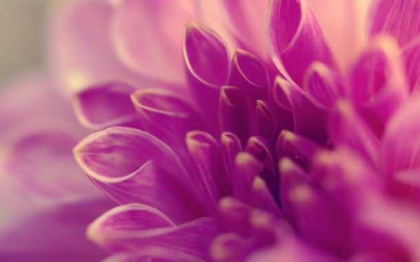 wallpaper flower HD (5)