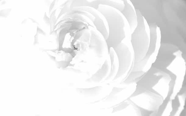 white wallpaper 5