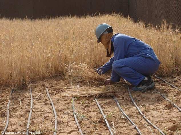 30 million dollar farm in Sahara desert3