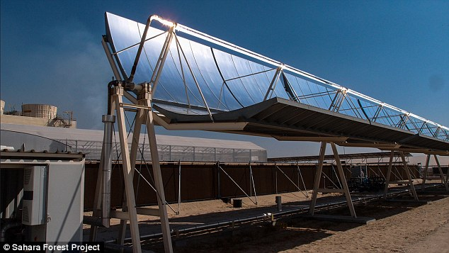 30 million dollar farm in Sahara desert4
