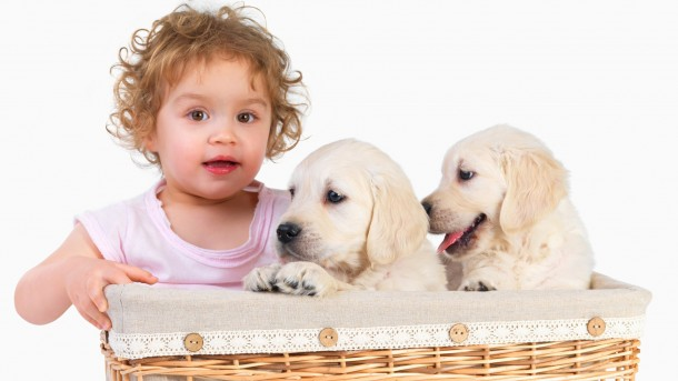 Baby girl and two puppies in a basket