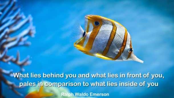 Inspiring Quotes (25)
