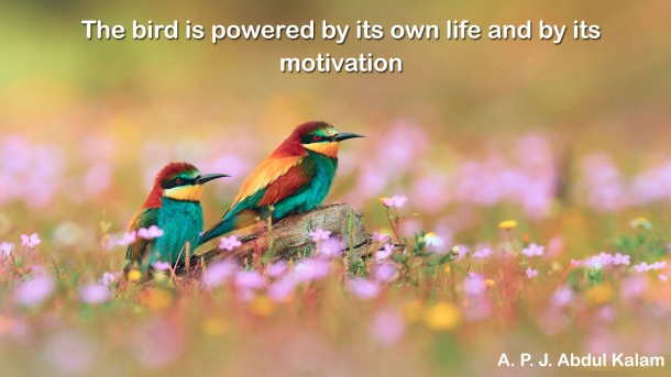 Motivational Quotes  (26)