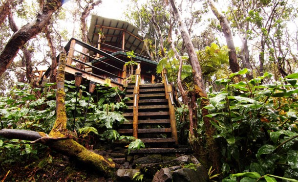 These Are The 10 Best Airbnb TreeHouses You Can Rent 3