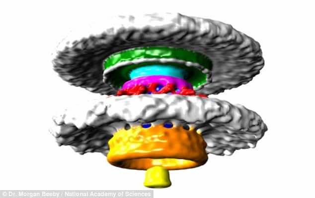 nano motors in bacteria