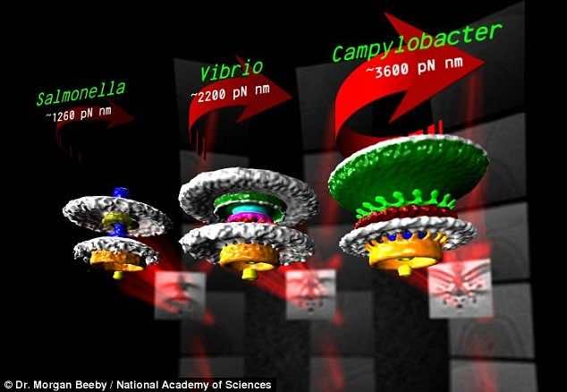 nano motors in bacteria3