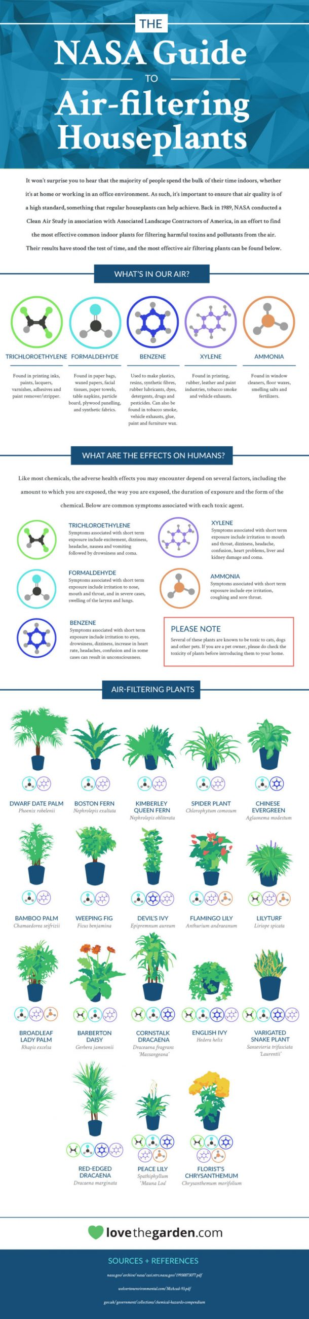 18 Plants That Are Best At Filtering Air In Your Home According To NASA 2