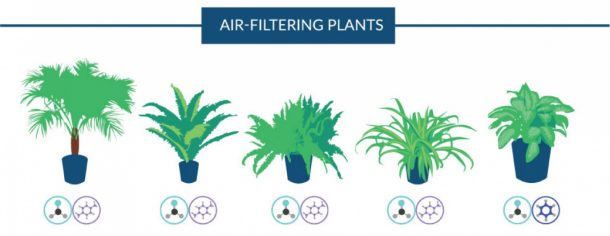 18 Plants That Are Best At Filtering Air In Your Home According To NASA 3