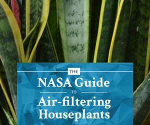 18 Plants That Are Best At Filtering Air In Your Home According To NASA 4