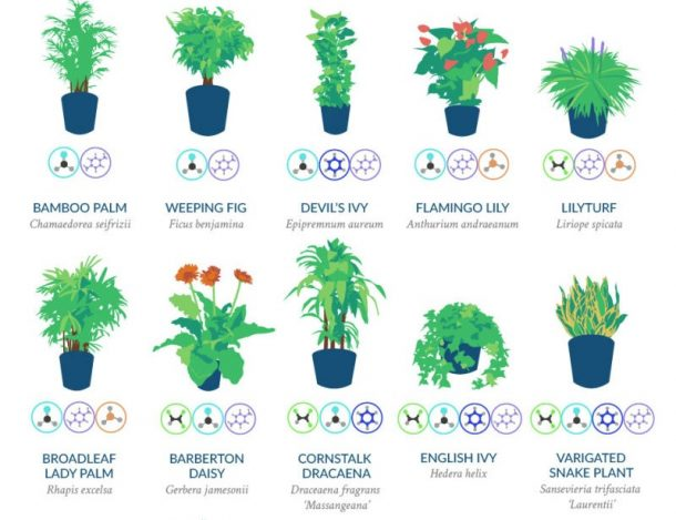 18 Plants That Are Best At Filtering Air In Your Home According To NASA