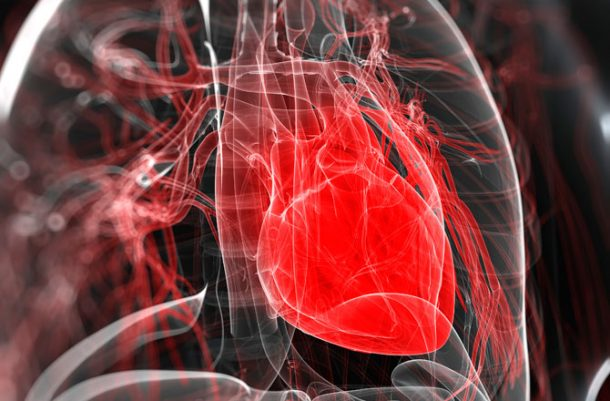 Stem Cells Used For Creating A Lab-Grown Beating Heart 3
