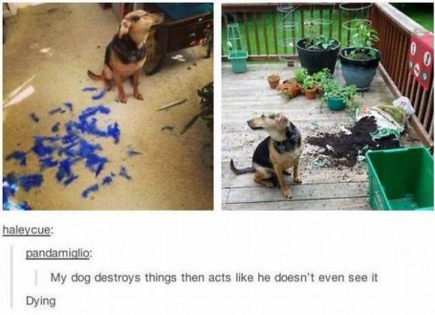 The Best Of Tumblr 7