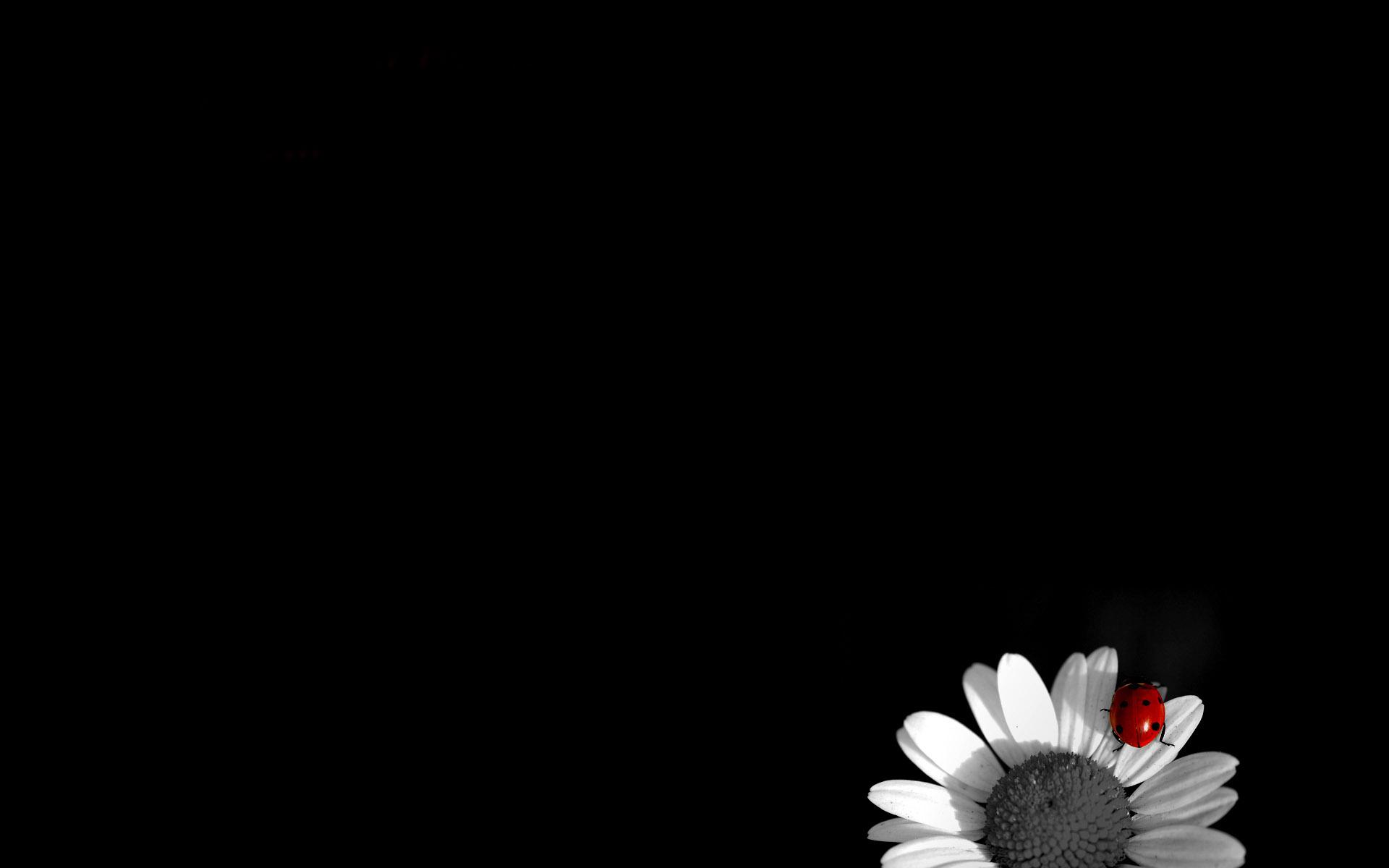 Free Download 40 Dark Wallpaper Images In 4k For Desktop Laptop