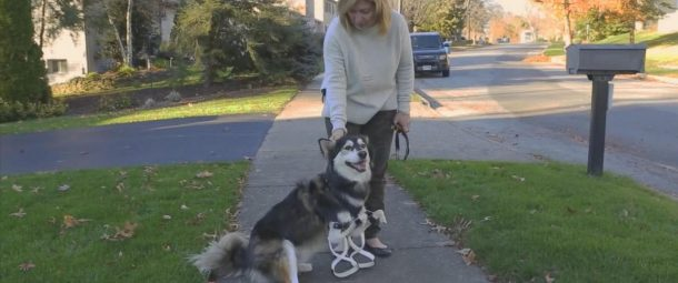 3D Printing is Saving the Lives of Hundreds of Animals_3 D Printed Legs for Derby_Image 1_Wonderful Engineering
