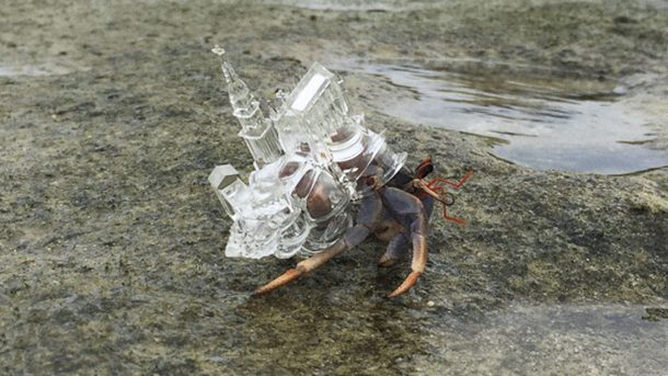 3D Printing is Saving the Lives of Hundreds of Animals_3D Printed Architectural Wonders for the Hermit Crab Shelter_Image 5_Wonderful Engineering