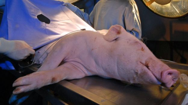 Autonomous Robot outperforms Human Surgeons Operates On A Living Pig_Image 4
