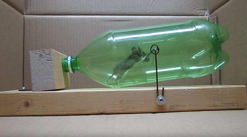 clever  humane mousetrap   soda bottle