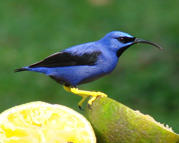 Genetic Engineering to Rescue Hawaii Birds_Image 3
