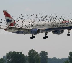 Here Is A New Technology That Could Save Birds From Flying Into Planes_Image 2
