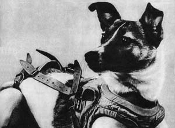 In 1957, This Dog Made History By Being The First Animal To Orbit The Earth_Image 3