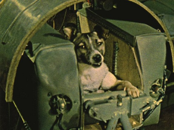 In 1957, This Dog Made History By Being The First Animal To Orbit The Earth_Image 4