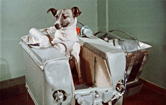 In 1957, This Dog Made History By Being The First Animal To Orbit The Earth_Image 5