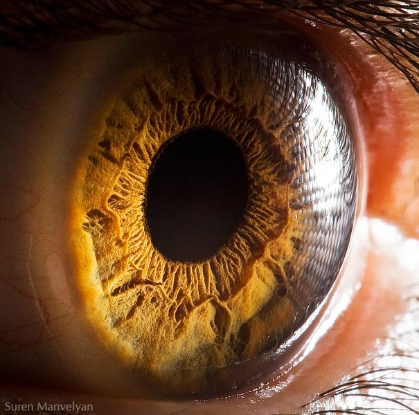 Mesmerizing Images Capture The Fascinating Complexity Of The Human Eye_Image 1