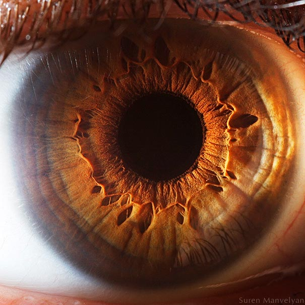 Mesmerizing Images Capture The Fascinating Complexity Of The Human Eye_Image 10