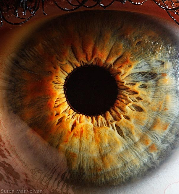 Mesmerizing Images Capture The Fascinating Complexity Of The Human Eye_Image 11