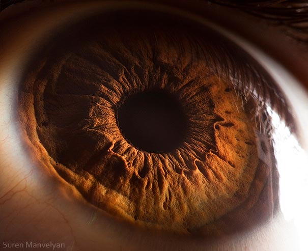 Mesmerizing Images Capture The Fascinating Complexity Of The Human Eye_Image 12