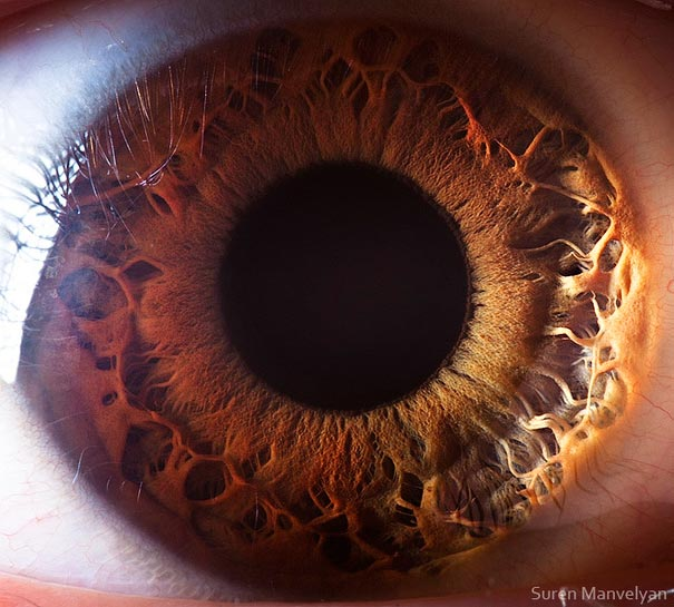 Mesmerizing Images Capture The Fascinating Complexity Of The Human Eye_Image 13